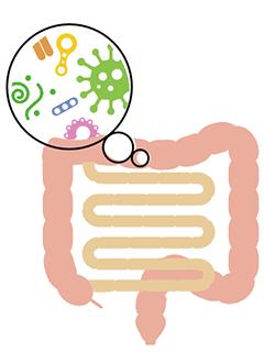 腸内イメージ